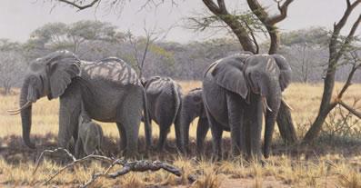 taking-shade-elephants-canvas-7098