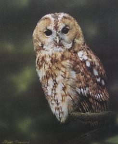 tawny-owl-4757