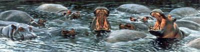the-big-yawn-hippos-2309