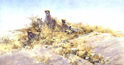 The Cheetahs Of Namibia
