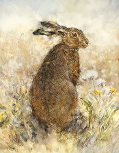 the-curious-hare-14831