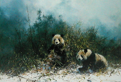 the-pandas-of-wolong-2892
