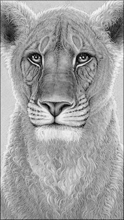 the-spirit-of-elsa-lioness-5087