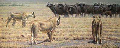 the-standoff-lionesses-canvas-7102