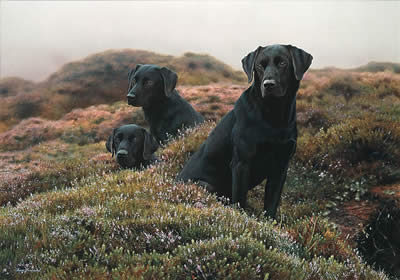 the-three-musketeers-black-labradors-1222