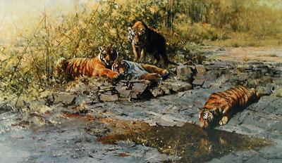 The Tigers Of Bandhavgarh