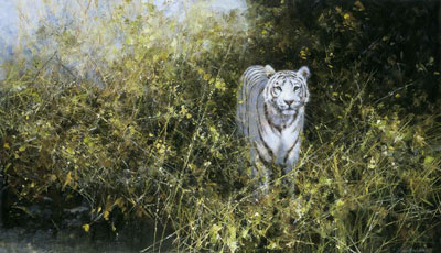 The White Tiger Of Rewa