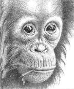 thinking-of-you-orangutan-1367