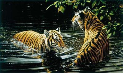 tiger-bengali-bathers-2377