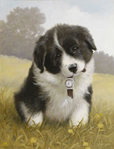 Timeout! - Border Collie Pup