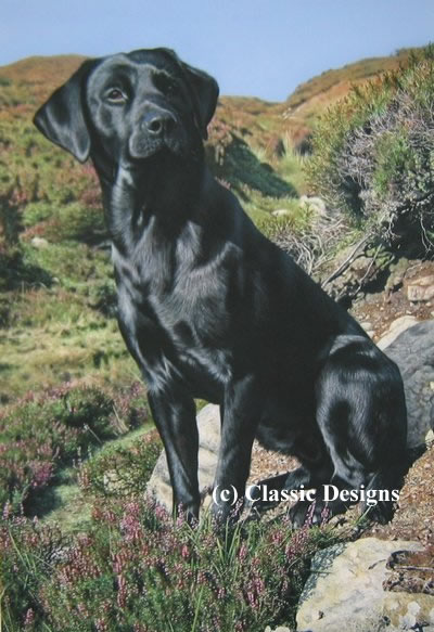 Tribute To Moses (Black Labrador)