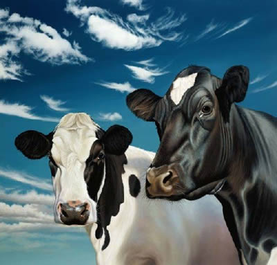 Trinny And Suzannah - Cows