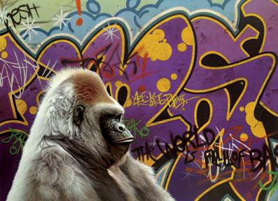 urban-gorilla-14919