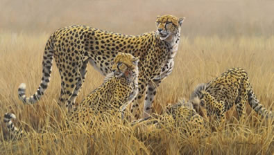 watching-for-scavengers-cheetahs-canvas-7096