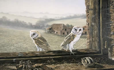 Welcome Return - Barn Owls by Ian Nathan