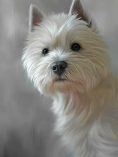 West Highland Terrier (40th Anniversary Image)