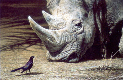 what-nest-rhino-bird-2310