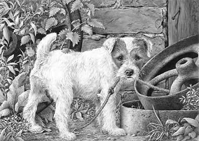 what-parson-russell-terrier-5554