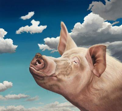 winston-pig-3443