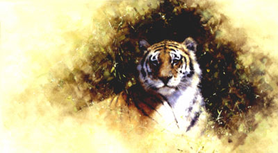 working-sketch-for-a-painting-of-a-tiger-2863