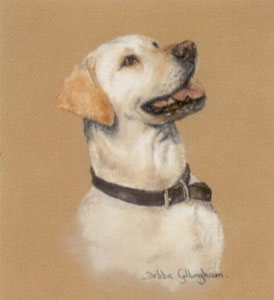yellow-labrador-study-3007