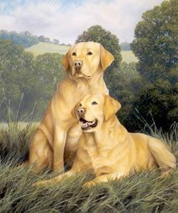 yellow-labradors-1497