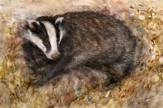 Badgers Rest by Gary Benfield