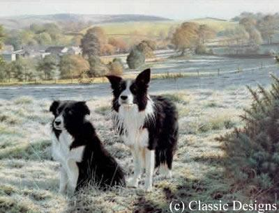 Best Friends - Border Collies by Steven Townsend