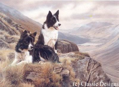 Bill & Ben - Border Collies by Steven Townsend