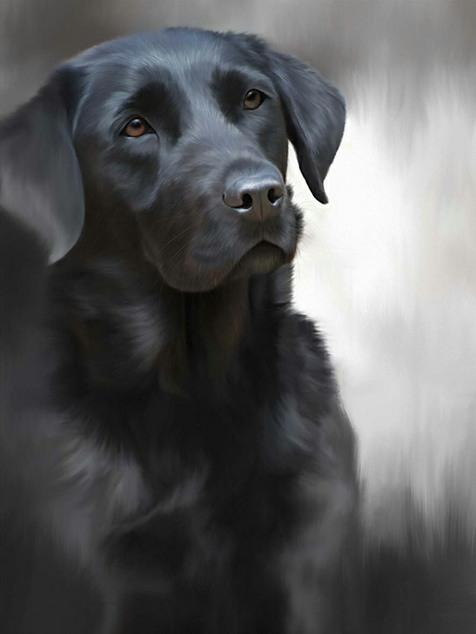Black Labrador (40th Anniversary Image) by Nigel Hemming