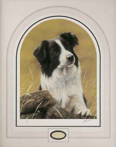 Classic Breed Border Collie by John Silver