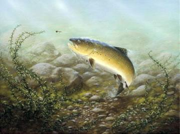 Country Sports Brown Trout by John Silver