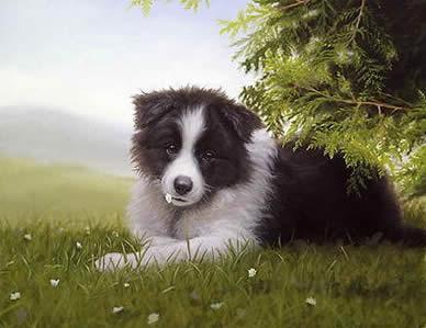 Daisy - Border Collie by John Silver