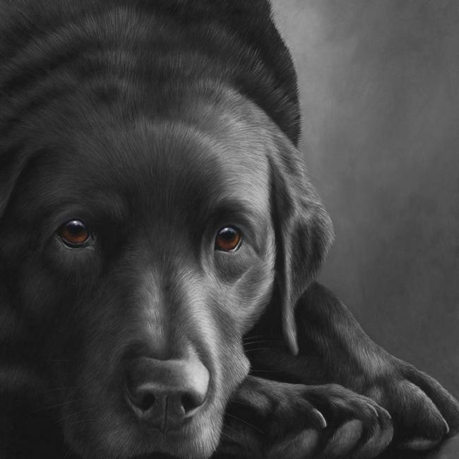 Dog Tired Black Labrador by Nigel Hemming