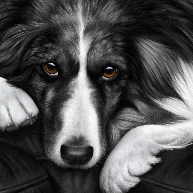 Dog Tired Border Collie by Nigel Hemming