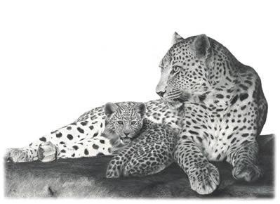 Fearless- Leopards by Wendy Corbett