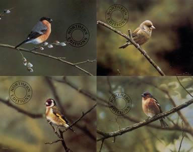 Finches - Set Of 4 by Steven Townsend