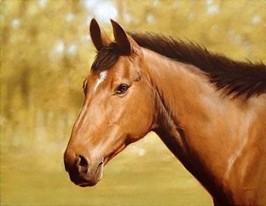 Horse Portrait by John Silver