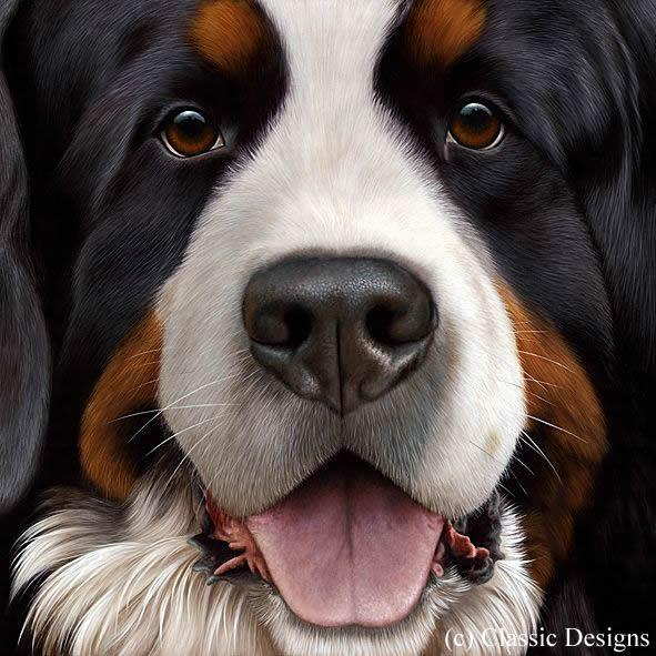 Larger Than Life - Bernese by Nigel Hemming