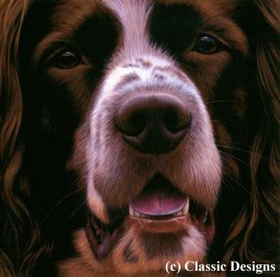 Larger Than Life - Springer Spaniel (Bc) by Nigel Hemming
