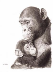 Safe In The Arms - Chimpanzees by Wendy Corbett
