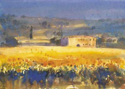 Sunflowers, Tuscany by Cecil Rice
