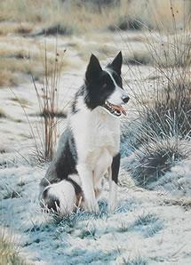 Take Five - Border Collie by Steven Townsend