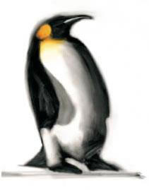 The Emperor - Penguins by Paul Powis