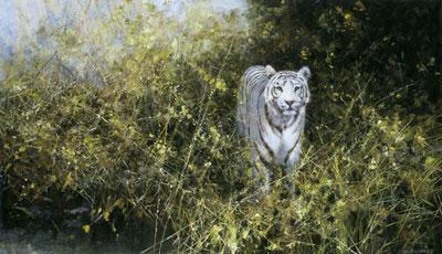The White Tiger Of Rewa by David Shepherd