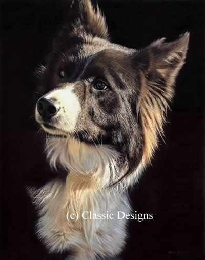 Tommy (Border Collie) by Steven Townsend