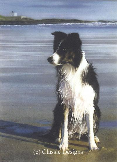 Waiting For Stan (Border Collie) by Steven Townsend