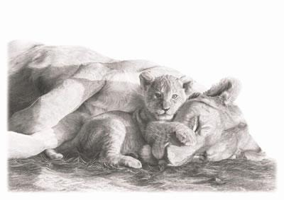 You Sleep ill Stand- Lions by Wendy Corbett
