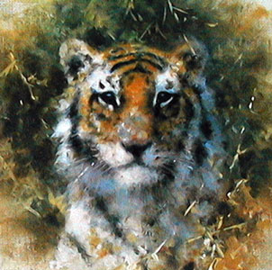 bengal-tiger-cameo-collection-2876
