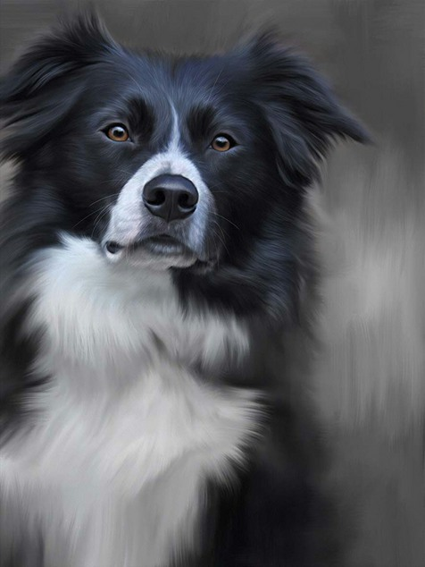 Border Collie (40th Anniversary Image) by Nigel Hemming